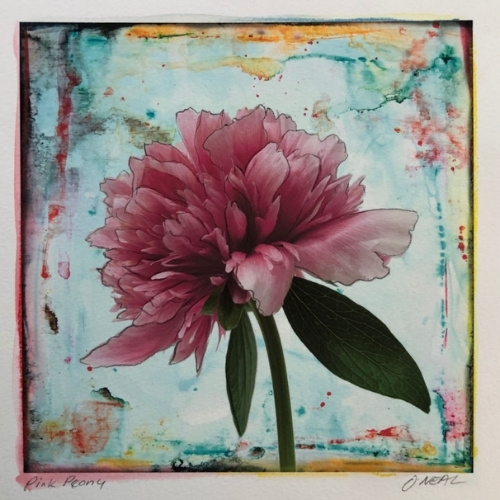 """""""Pink Peony,"""" a watercolor by Janet O'Neal, 8 x 8 inches."""